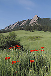 Red poppy wildflowers and the Flatirons rock formation in Chautauqua Park, Boulder, Colorado, USA .  John leads private photo tours in Boulder and throughout Colorado. Year-round Colorado photo tours.