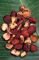 """Océanie/Australie/Queensland: Les ingrédients de la cuisine Bush """"Quandong"""" baie rouge  du bush, ingrésdient de la cuisine aborigène"""