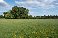 26.5.2020 Grass meadow <br /> ©Tim Scrivener Photographer 07850 303986<br />      ....Covering Agriculture In The UK....