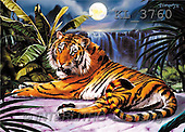 Interlitho, Lorenzo, REALISTIC ANIMALS, paintings, tiger, moon, waterfall(KL3760,#A#) realistische Tiere, realista, illustrations, pinturas ,puzzles