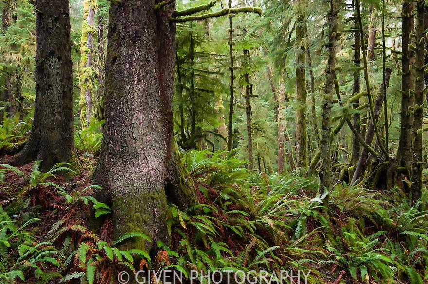Coast Forest, Ecola State Park, Oregon