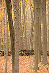 Stone wall in woods.
