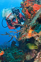 Scuba Diver along the wall<br /> North Star dive site <br /> Cane Bay, <br /> St. Croix, US Virgin Islands