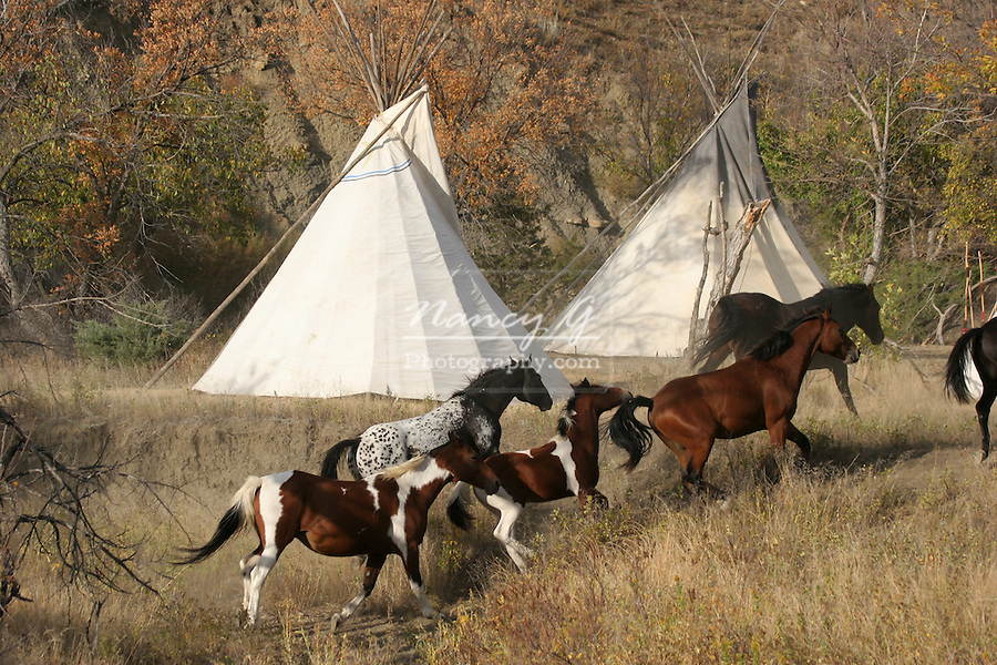 Horses running through a Native American Indian tipi village in South Dakota