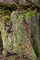 Moss covered tree stump