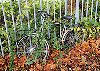 Nederland Rotterdam 2015. Fiets begroeid met planten.  Foto Berlinda van Dam / Hollandse Hoogte