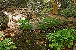 Israel, Shephelah. The garden at kibbutz Netiv Halamed Hei