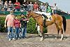 No Crossing Lane winning at Delaware Park on 5/12/12