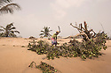 Ghana - Fuveme - A villager chops a tree that was destroyed by the tide. Once the site of several coconut plantations, today the shoreline of Fuvemeh has been reduced to a steep, narrow stretch, where the few remaining tree are being uprooted by the force of the ocean.