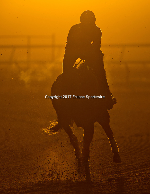ELMONT, NY - JUNE 09: A horse exercises during morning workouts in preparation for the Belmont Stakes at Belmont Park on June 9, 2017 in Elmont, New York (Photo by Scott Serio/Eclipse Sportswire/Getty Images)