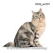 Xavier, ANIMALS, REALISTISCHE TIERE, ANIMALES REALISTICOS, FONDLESS, photos+++++,SPCHWS597,#A#