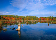 Wetlands area in Harvey's Kennard Hill Forest in Epping, New Hampshire USA during the autumn months. This area is located at the end of French Road.