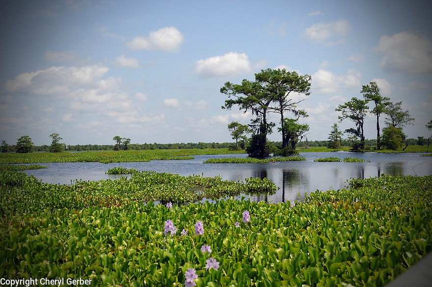 Wetlands in Louisiana