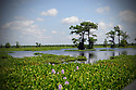 Louisiana Landscape