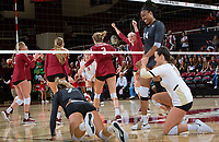 STANFORD, CA - November 3, 2018: Kathryn Plummer, Holly Campbell, Kate Formico, Morgan Hentz, Jenna Gray at Maples Pavilion. No. 1 Stanford Cardinal defeated No. 15 Colorado Buffaloes 3-2.