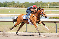 #49Fasig-Tipton Florida Sale,Under Tack Show. Palm Meadows Florida 03-23-2012 Arron Haggart/Eclipse Sportswire.