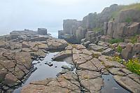 Basalt rock in fog along the Bay of Fundy<br />Brier Island on DIgby Neck<br />Nova Scotia<br />Canada