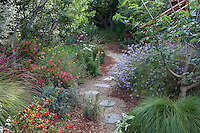 Stepping stones on permeable path through sideyard mixed border with California native plants, Heath-Delaney garden