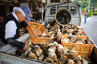 A worker offloads bamboo shoots from a truck, Yamaguchi farm, Otaki, Chiba prefecture, Japan, April 29, 2011.