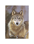 Poster by Bruce McGaw Graphics<br /> Woodland Pride, Montana <br /> Paper: 14 x 11 in. (36 x 28 cm.) <br /> Image: 10.5 x 7.5 in. (27 x 19 cm.) <br /> Perfect for mounting or framing. Watermark does not appear on product.