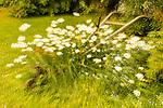 Orton Effect of garden flowers at Crow Creek Mine in Girdwood in Southcentral Alaska. Summer. Morning.