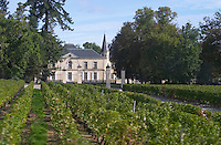 Vineyard. Chateau Lynch Moussas, Pauillac. Medoc, Bordeaux, France
