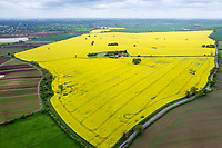 Oil seed rape in flower - Shropshire, May