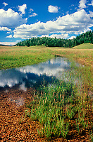 749220307 clouds are reflected in a small pond with native grasses and forest surrounding a grassland habitat in the high country on the road to the north rim entrance to grand canyon national park in arizona