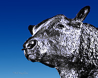 A bronze sculpture of the famous Aberdeen Angus bull at Alford.  Erected in commemoration of William McCombie one of the founders of the breed who farmed locally. Copyright www.dsider.co.uk dSider whats on guide Alford, photography courses. Photography by Bill Bagshaw.