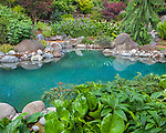 Vashon-Maury Island, WA: Salt water plunge pool surrounded by woodland perennial garden with hellebore and bergenia in the foreground.