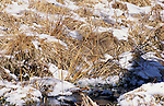 This remarkable photograph stumps even the experts. Barely visible in the lower left third of the image is a common snipe nestled in the snowy vegetation along a Minnesota stream. These shy, secretive birds inhabit marshes, wet meadows, bogs, and moors.