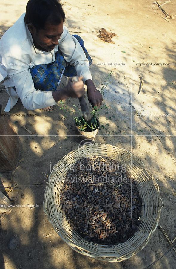INDIA, Maikaal Project, farmer prepares a bio pesticide from seeds of Neem tree which is used against pest in organic cotton farming / INDIEN, Maikaal Projekt, Bauer nutzt den Samen des Niembaum für natürliche Pestizide für den biologischen Baumwollanbau gegen Pflanzenschädlinge