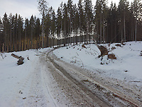 FOREST_LOCATION_90046