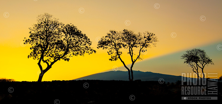 A warm sunrise beams out behind the silhouette of Hualalai mountain and three trees at Kua Bay, Kona, Big Island.