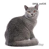 Xavier, ANIMALS, REALISTISCHE TIERE, ANIMALES REALISTICOS, FONDLESS, photos+++++,SPCHWS636,#A#