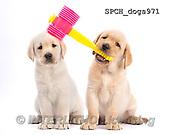 Xavier, ANIMALS, REALISTISCHE TIERE, ANIMALES REALISTICOS, fondless, photos+++++,SPCHDOGS971,#A#