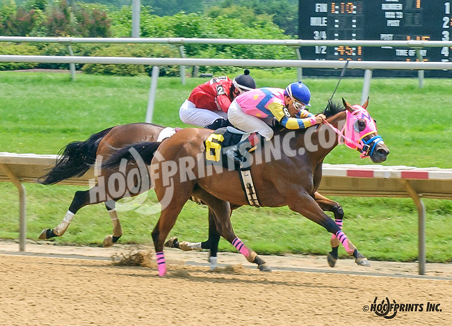 Wild For Love winning at Delaware Park on 7/1/15