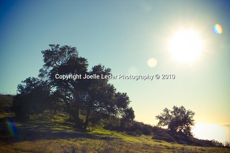 Joelle Leder Photography © 2010