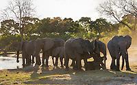 Elephant breeding herd on the Kwai River