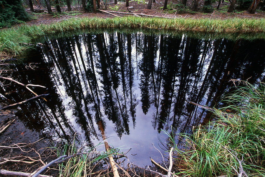 The black waters of an alpine lake reflect the surrounding trees, Eagles Nest Wilderness area, Colorado.