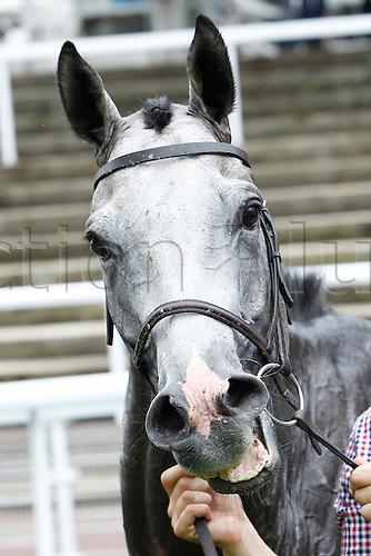 15.09.2016. Auteuil Racecourse, Paris, France.  Race 3-Alain Et Gilles De Goulaine Listed Handicap Hurdle.  Chase. Capivari