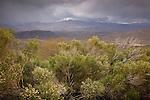 The Bradshaw Mountains in Prescott National Forest, AZ, USA