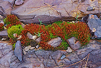 Moss and rock, Sudbury, Ontario, Canada