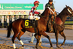 November 24, 2018 : Liora (jockey Channing Hill,#6) wins the 75th running of the G2 Golden Rod at Churchill Downs, Louisville, Kentucky. Owner Coffeepot Stables (Bob Cummings and Annette Bacola), trainer Wayne M. Catalano. By Candy Ride x Giant Mover (Giant's Causeway) Restless Rider (jockey Brian J. Hernandez Jr., #5) was second. Mary M. Meek/ESW/CSM