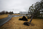 Trees at Rancho Aspen Park, uprooted by high winds, are among the damage and loss as another wet winter storm rolls through Northern Nevada, in Gardnerville, Nev. on Friday, Feb. 10, 2017.  <br />