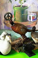 artificial ducks