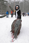 Woman dragging a freshly cut Christmas tree at Harvest-your-own tree farm in Ontario Canada