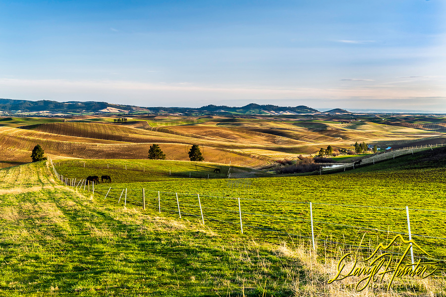 Horse pasture and the beautiful rolling hills of the Idaho Palouse at Plummer Idaho.  The Palouse has to be one of the prettiest places to farm in the world.