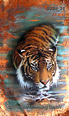 Sandi, REALISTIC ANIMALS, REALISTISCHE TIERE, ANIMALES REALISTICOS, paintings+++++coppertiger2,USSN38,#a#, EVERYDAY ,tiger,tigers, ,puzzles