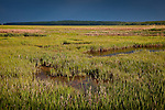 Early summer in Scarborough Marsh in Scarborough, ME, USA